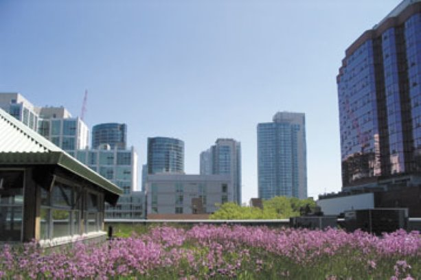 Fire safety concerns raised for green roofs