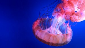 Niagara Falls Aquarium begins building jellyfish exhibit