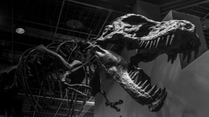 China building boom uncovers buried dinosaurs for paleontologists