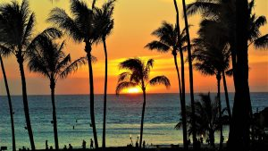 Turtle Bay Resort prepares for planned expansion