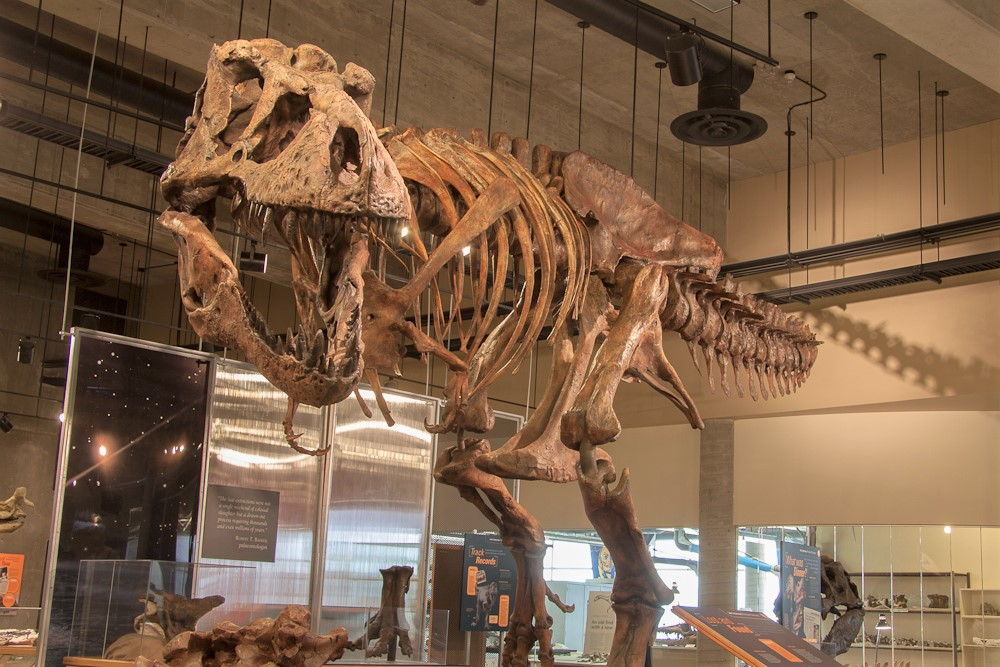 Scotty, the world's largest T-Rex, is coming to Regina