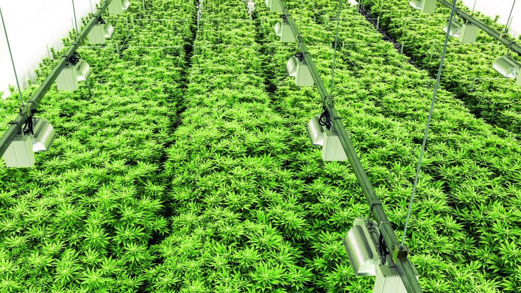 Engineer deals the straight dope on marijuana production facilities