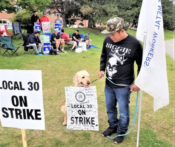 Members of Sheet Metal Workers' and Roofers' Local 30 were joined by a canine supporter during picketing at the Toronto Sheet Metal Contractors Association headquarters in Richmond Hill June 24. Local 30 Facebook.
