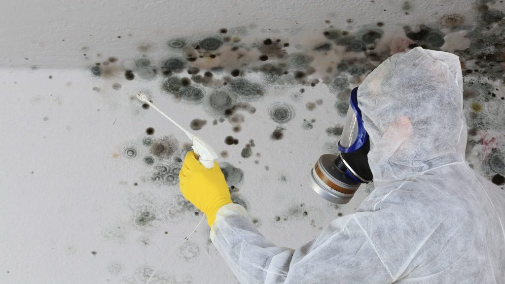 Builders, contractors at risk when buildings go mouldy