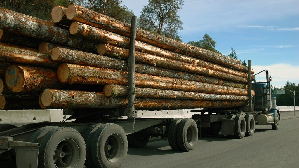 U.S. federal court blocks timber sale in Alaska's Tongass Forest