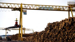 'Perfect storm' spikes lumber prices in Alberta
